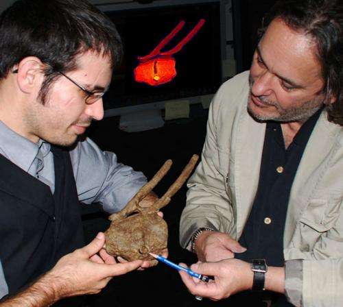 Broken tooth in dino tail 'proves' T. rex was predator
