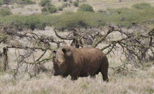 Gunmen have shot dead a white rhino in Nairobi's national park, a brazen raid in one of the best guarded sites in Kenya