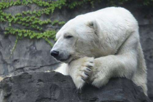 Gus, the beloved New York polar bear at the Central Park Zoo, has died