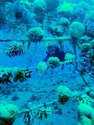 Homing in on stressed coral