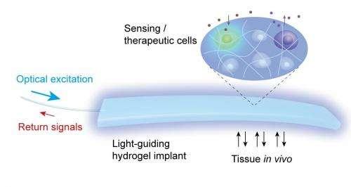 Team develops light-guiding hydrogel for cell based sensing