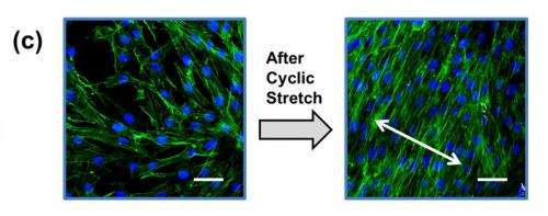 Illinois chemical/bioengineers use adhesion to combine advantages of silicones and organic materials