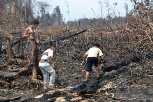 Indonesian children play on a burned peatland forest in Dumai, Riau province, on Sumatra island, June 28, 2013