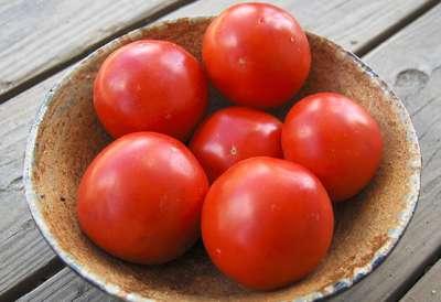 Iron Lady tomatoes resist three fungal diseases