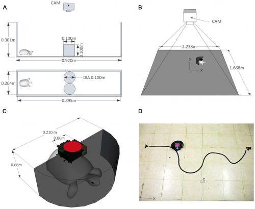 Turtles make the right moves via remote control