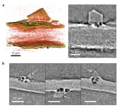 New view of dendrites in Li batteries gets to the root of the problem
