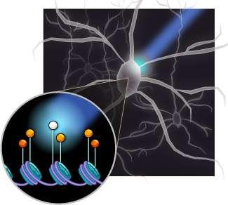 LITE illuminates new way to study the brain