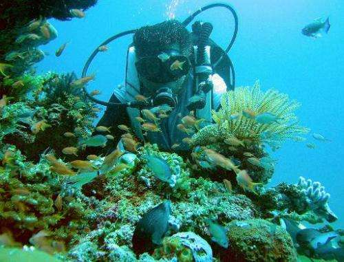 Local dive master Joel Pandino shows a coral reef formation in the Verde sea passage south of Manila on February 21, 2007