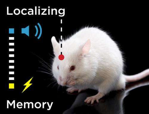 Long-term memory in the cortex