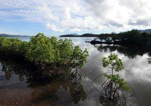 Mangrove trees are seen at Ulugan Bay shores in Puerto Princesa, Palawan island, south of Manila, on April 25, 2012