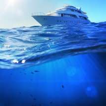 Marine life gets drowned out as oceans get noisier