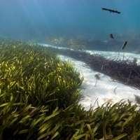 Marine plants provide defence against climate change
