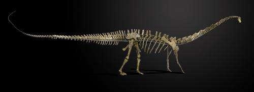 Misty the dinosaur skeleton heads to Denmark