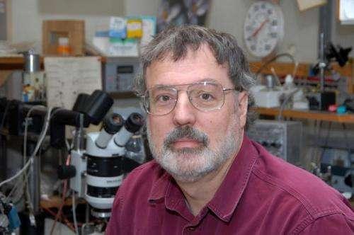 MU research sheds light on nerve regeneration following spinal cord injury