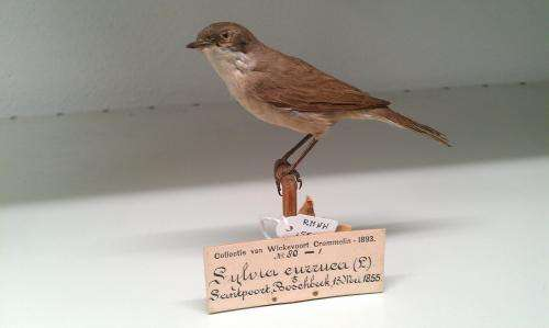Museum bird DNA 'ready for use' in Naturalis Biodiversity Center