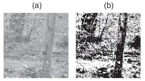 Thermodynamics of visual images may help us see the world