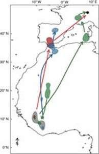 Study shows alpine swift can stay aloft for 200 days