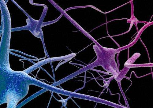Neurons that can multitask greatly enhance the brain's computational power, study finds