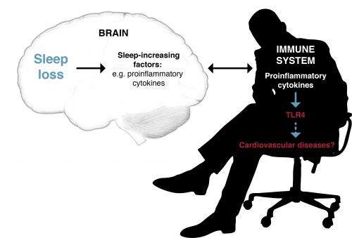 New biological links between sleep deprivation and the immune system discovered