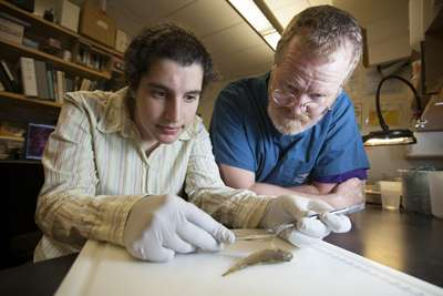 New fish test for virus is nonlethal