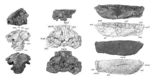 New fossil species from a fish-eat-fish world when limbed animals evolved