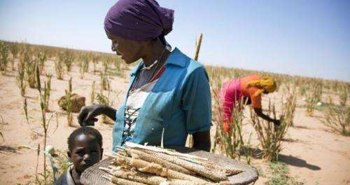 New mobile technology can test for agricultural pathogens in Africa