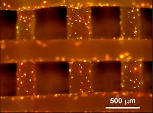 New scaffold reference material for tissue engineering research
