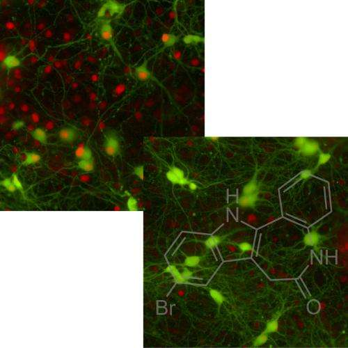 New stem cell-based screen reveals promising drug for Lou Gehrig's disease