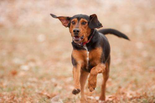 New test can diagnose emerging strains of canine parvovirus