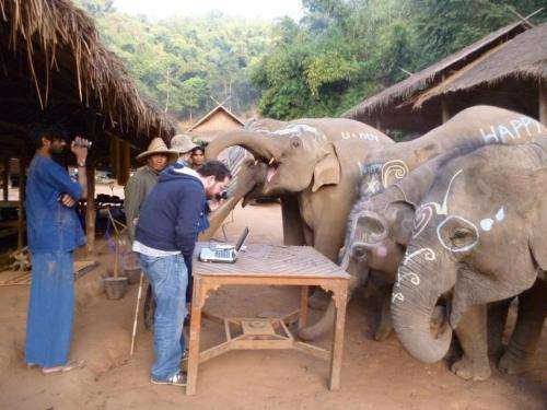 New Think Elephants International research reveals how elephants 'see' the world