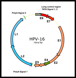 NIH scientists find promising biomarker for predicting HPV-related oropharynx cancer