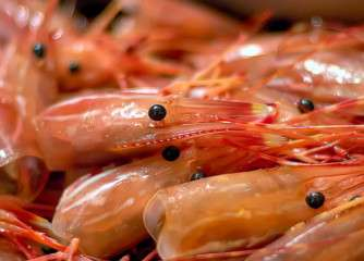 Nylons made from shrimps