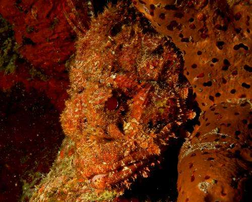 Field study suggests sponges creating food for coral reef organisms