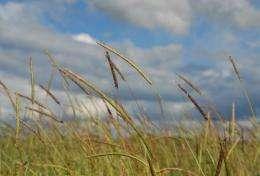 Overcoming multiple herbicide resistance