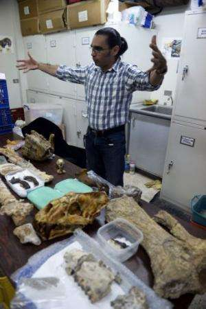 Paleontologist Ascanio Rincon shows bones of phehistoric animals found in Venezuela, in Caracas on August, 30, 2013