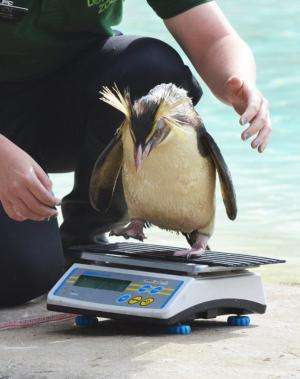 Penguins predict summer is on the way