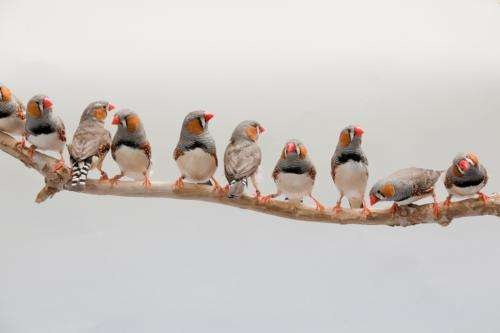 Personality is the result of nurture, not nature, suggests study on birds