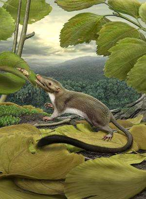 Placental mammal diversity exploded after age of dinosaurs
