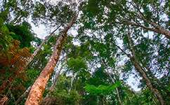 Rainforest carbon recovers faster than biodiversity
