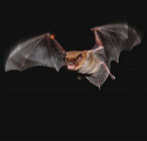 Rats' and bats' brains work differently on the move