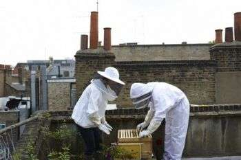 Rise in urban beekeeping may have gone too far, scientists warn
