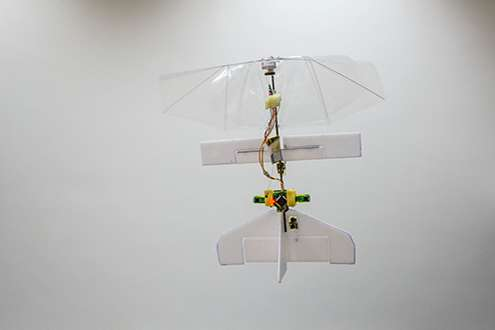 Robot dragonfly DelFly Explorer avoids obstacles by itself