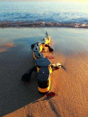 Salamandra robotica II, the only robot able to swim, crawl and walk
