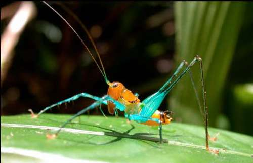 Bugs reveal the richness of species on Earth