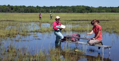 Scientist studies Hurricane Sandy's impact on N.J. coastal wetlands, one year later
