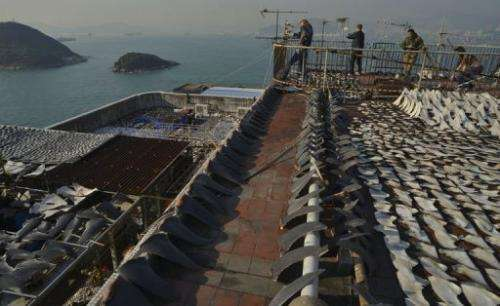 Shark fins are seen being dried in the sun on the roof of a factory building in Hong Kong, on January 2, 2013