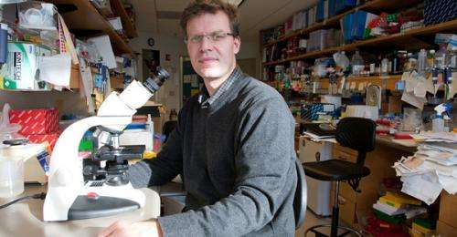 Stem-cell-based strategy boosts immune system in mice