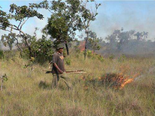 Study demonstrates that indigenous hunting with fire helps sustain Brazil's savannas