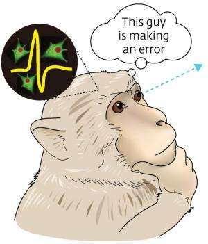 Study of brain activity in monkeys shows how the brain processes mistakes made by others
