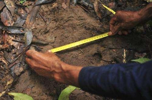 Sumatran rhino footprints believed found on Borneo